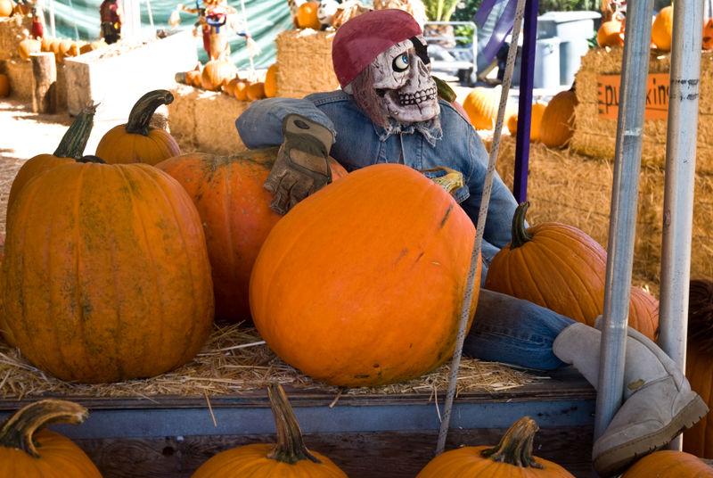Pumpkin Man DSC6110