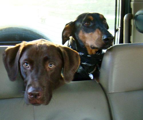 In the Car DSC01626
