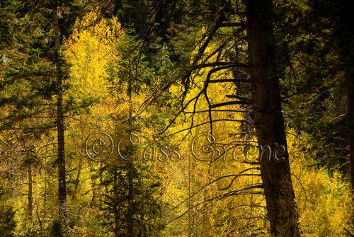 2008-10-11 02-52-56 PM DSC_6502A