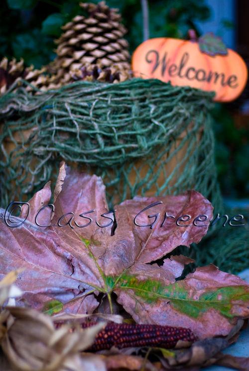 2008-11-01 05-50-58 PM DSC_8331A