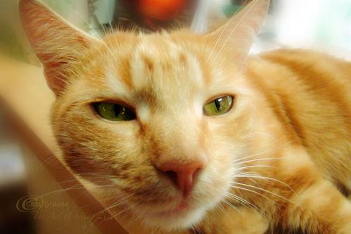 Orange Cat3 DSC02910