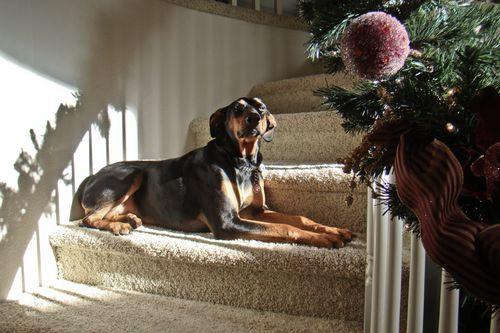 Quigley Stairs DSC05380