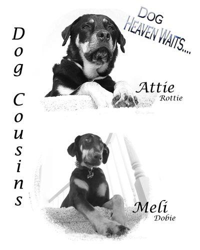 Dog Duo BW