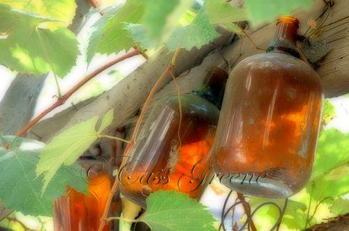 2007-10-28 11-41-09 AM DSC_1986