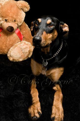 Quigley Bear_CAS9216