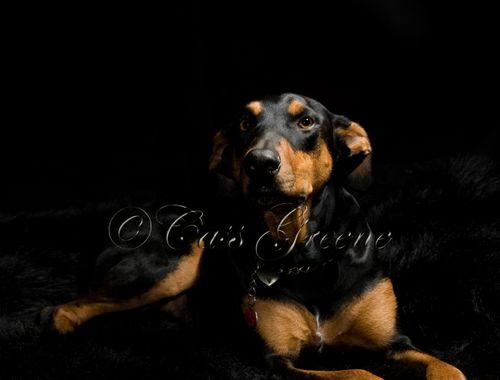 Quigley Black_CAS9160