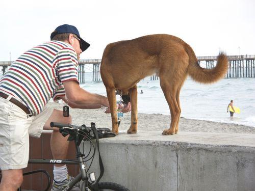 Beach Dogs 2009.8.31 IMG1603