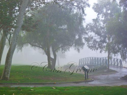 Tree Fog 4506