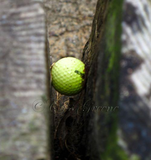 Golf ball 4486