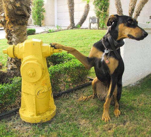 Q fireman 4922
