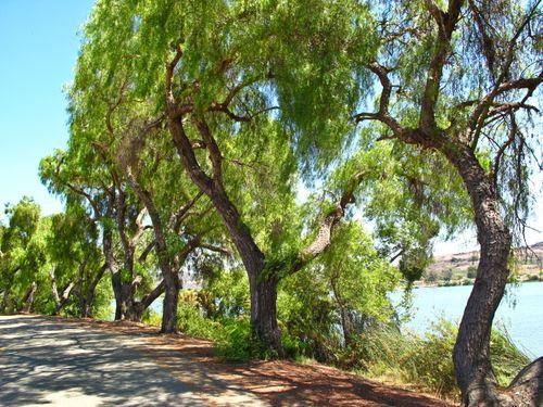 Trees 2064