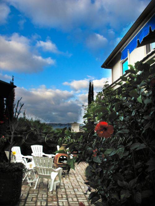 Garden 2009-09-30 07.35.16 AM IMG_5432