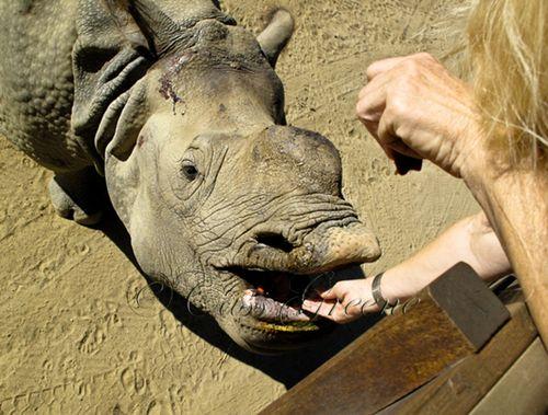 Hippo 2009-10-31 11.44.48 AM IMG_0839